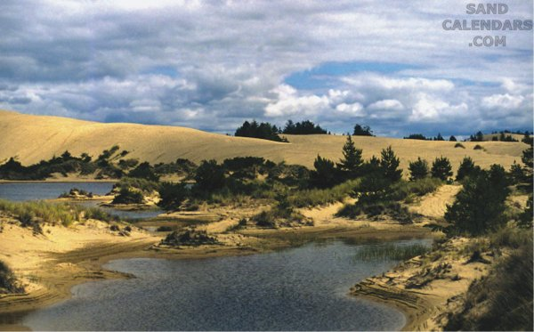 Sand Dunes Coos Bay Oregon