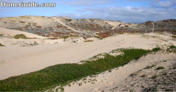 Marina Dunes Preserve - Closed to OHVs